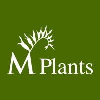 M Plants